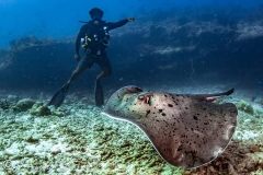 maldives-liveaboard-10