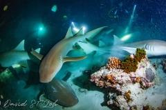 maldives-liveaboard-11
