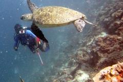 Sipadan-turtles