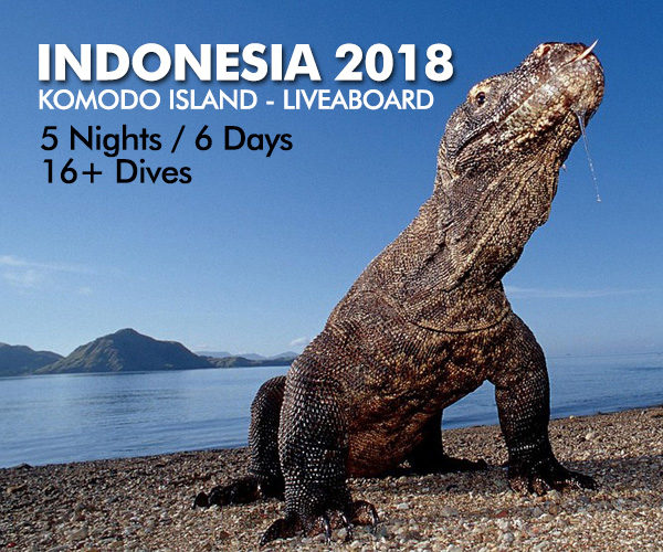 dive-trips-komodo-island