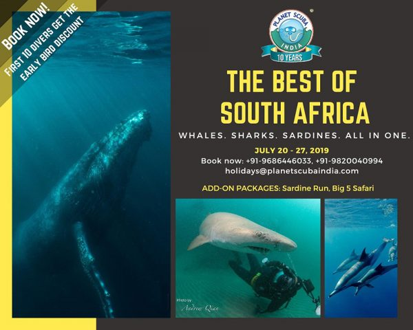 Whales-Sharks-Sardine-run