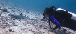 diving in india with planet scuba india
