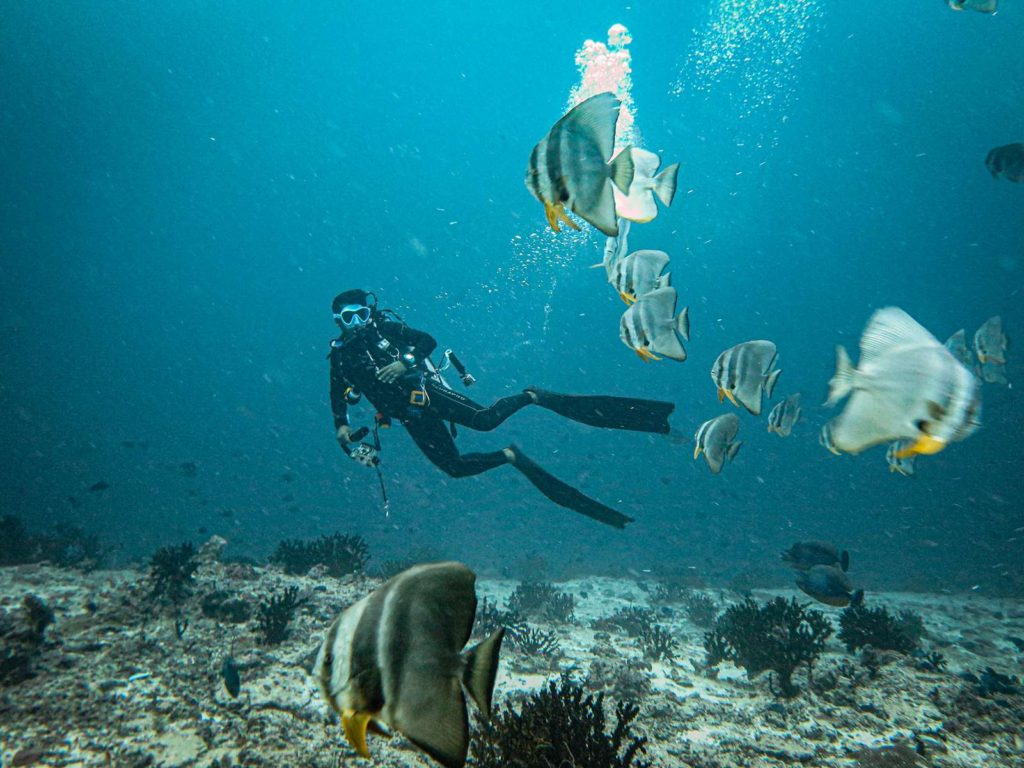 scuba dive in india