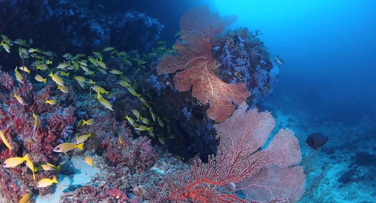 scuba diving in addu atoll